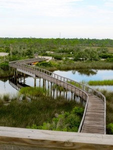 Pensacola Wetlands Twardowski